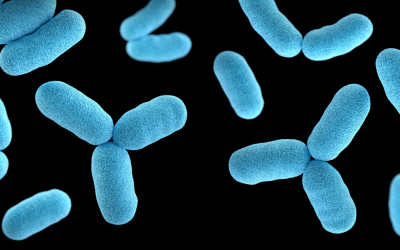 Applying One Health approaches to antimicrobial resistance in Indonesia – epidemiology eLearning